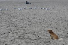 Meeting a Flock of Seagulls